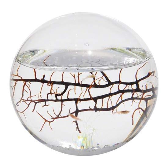 EcoSphere Closed Aquatic Ecosystem, Sphere
